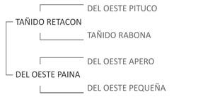 Genealogía Del Oeste Porteño